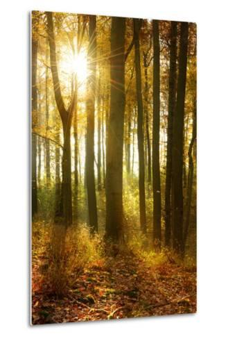 Sunrays and Morning Fog, Deciduous Forest in Autumn, Ziegelroda Forest, Saxony-Anhalt, Germany-Andreas Vitting-Metal Print