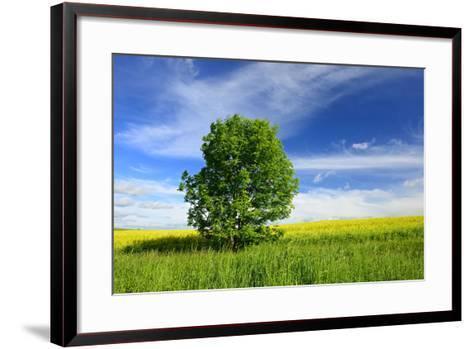 Tree on the Edge of a Rape Field in the Spring, Saalekreis, Saxony-Anhalt, Germany-Andreas Vitting-Framed Art Print