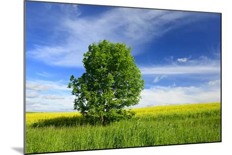 Tree on the Edge of a Rape Field in the Spring, Saalekreis, Saxony-Anhalt, Germany-Andreas Vitting-Mounted Photographic Print