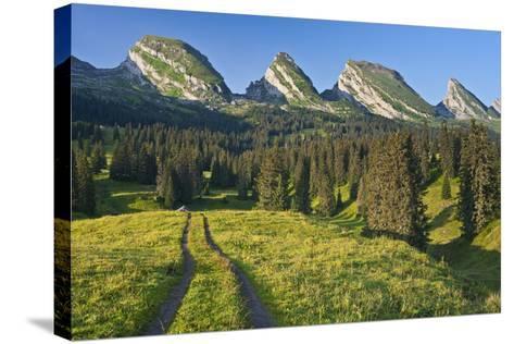 Switzerland, St. Gallen, Chur Prince, Alpine Grassland, Lanes-Rainer Mirau-Stretched Canvas Print