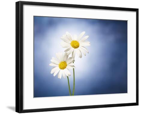 Marginuerites, Flowers, Blossoms, Still Life, Blue, White-Axel Killian-Framed Art Print