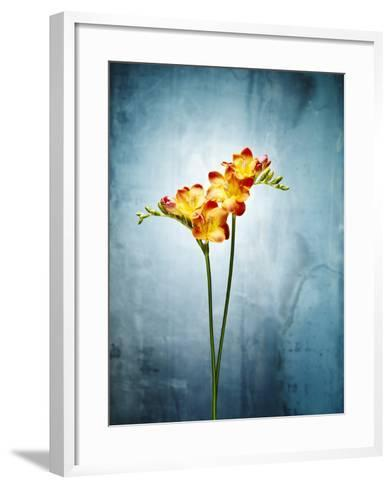 Freesia, Flower, Blossoms, Buds, Still Life, Red, Yellow, Blue-Axel Killian-Framed Art Print