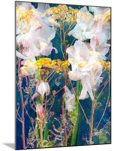 Composing of Flowers-Alaya Gadeh-Mounted Photographic Print