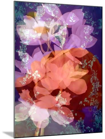 Floral Montage, Photographic Layer Work-Alaya Gadeh-Mounted Photographic Print