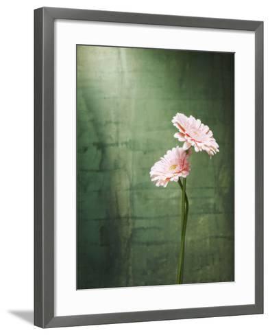 Gerbera, Flowers, Blossoms, Pink, Still Life-Axel Killian-Framed Art Print