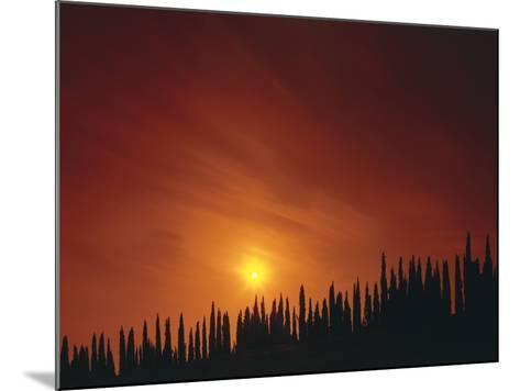 Italy, Tuscany, Cypresses, Evening Sun-Thonig-Mounted Photographic Print