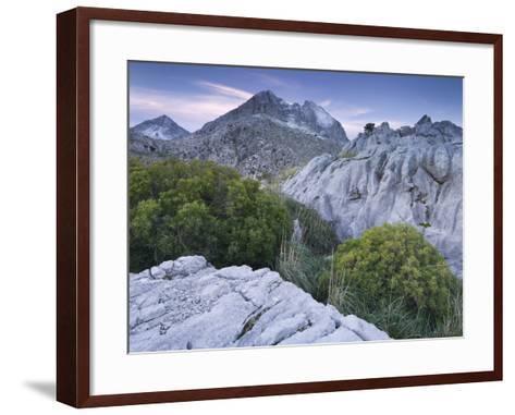 Spain, Majorca, Serra De Tramuntana, Puig Major, Puig De Ses Vinyes, Col De Cals Reis, Rock, Shrubs-Rainer Mirau-Framed Art Print