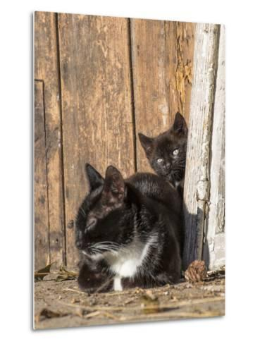 Young Cat with Mother-Andrea Haase-Metal Print