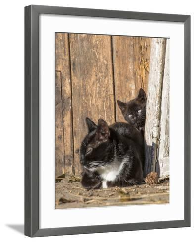Young Cat with Mother-Andrea Haase-Framed Art Print