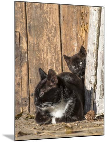 Young Cat with Mother-Andrea Haase-Mounted Photographic Print