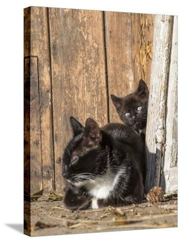 Young Cat with Mother-Andrea Haase-Stretched Canvas Print