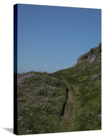 Meadow, Wild Flowers, Grass, Coast, England-Andrea Haase-Stretched Canvas Print