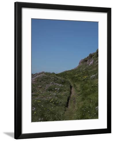 Meadow, Wild Flowers, Grass, Coast, England-Andrea Haase-Framed Art Print