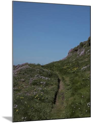 Meadow, Wild Flowers, Grass, Coast, England-Andrea Haase-Mounted Photographic Print
