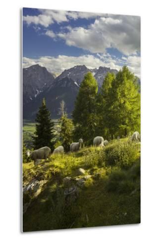 Sheep at the Iselsberg, Lienz Dolomites, East Tyrol, Tyrol, Austria-Rainer Mirau-Metal Print