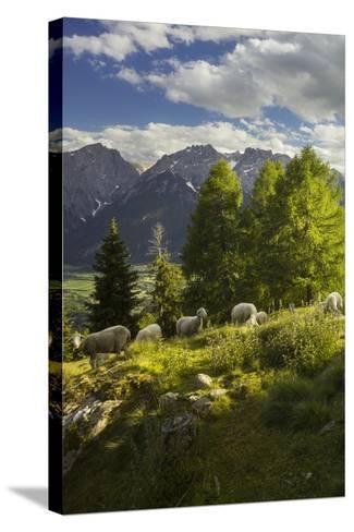 Sheep at the Iselsberg, Lienz Dolomites, East Tyrol, Tyrol, Austria-Rainer Mirau-Stretched Canvas Print