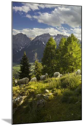Sheep at the Iselsberg, Lienz Dolomites, East Tyrol, Tyrol, Austria-Rainer Mirau-Mounted Photographic Print