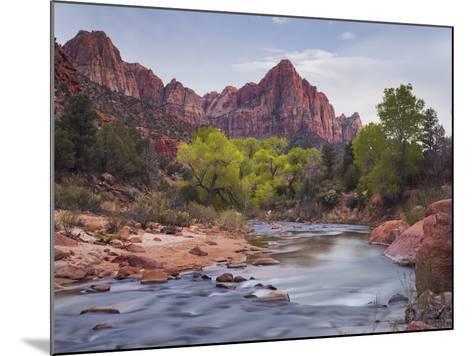 The Watchman, Cottonwood, Virgin River, Zion National Park, Utah, Usa-Rainer Mirau-Mounted Photographic Print