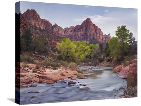 The Watchman, Cottonwood, Virgin River, Zion National Park, Utah, Usa-Rainer Mirau-Stretched Canvas Print