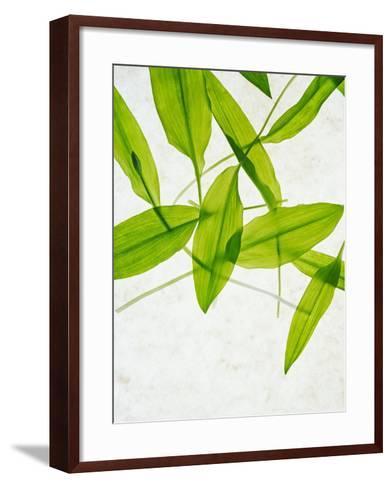 Wild Garlic, Allium Ursinum, Leaves, Green-Axel Killian-Framed Art Print