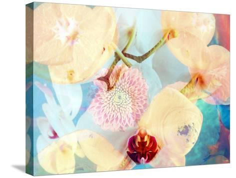 Composing with White and Pink Blossoms Infront of Blue Background-Alaya Gadeh-Stretched Canvas Print