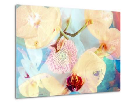 Composing with White and Pink Blossoms Infront of Blue Background-Alaya Gadeh-Metal Print