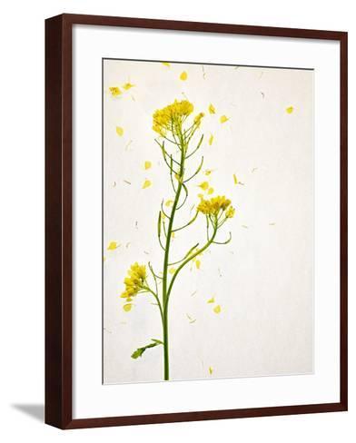 White Mustard, Mustard, Sinapis Alba, Stalk, Blossoms, Yellow-Axel Killian-Framed Art Print