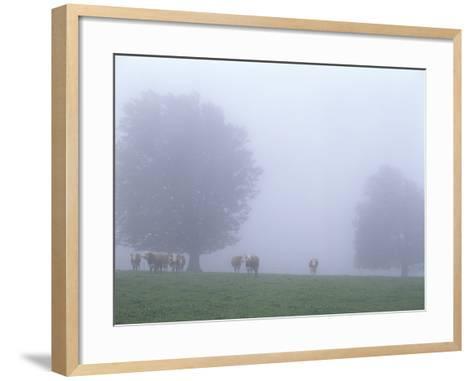 Germany, Baden-WŸrttemberg, Black Forest, Schauinsland, Cows in Fog-Andreas Keil-Framed Art Print