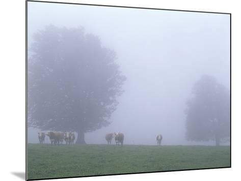 Germany, Baden-WŸrttemberg, Black Forest, Schauinsland, Cows in Fog-Andreas Keil-Mounted Photographic Print