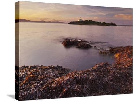Lighthouse of Alcanada, Beach, Sea Grass, Dusk, Majorca, Spain-Rainer Mirau-Stretched Canvas Print