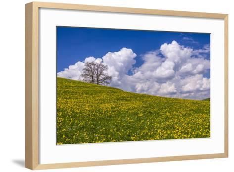Germany, Bavaria, Upper Bavaria, FŸnfseenland, Jenhausen, Municipality Seeshaupt, Spring Scenery-Udo Siebig-Framed Art Print