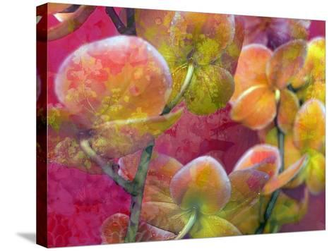 Blooming Orchids in Orange Tones Infront of Red Pink Floral Ornament Backgound-Alaya Gadeh-Stretched Canvas Print