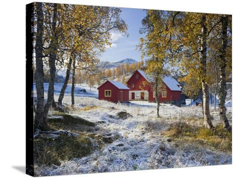 Norway, Valldalen, Farm, Birches, Late Autumn-Rainer Mirau-Stretched Canvas Print