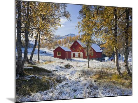 Norway, Valldalen, Farm, Birches, Late Autumn-Rainer Mirau-Mounted Photographic Print