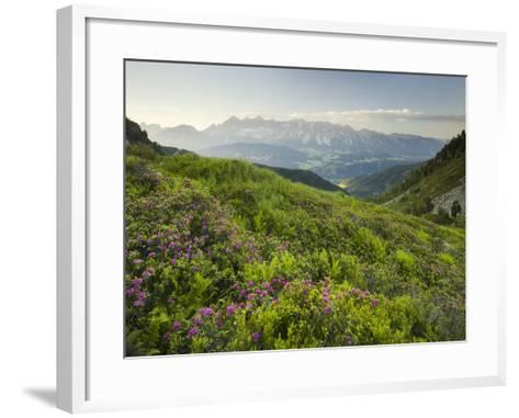 Alpenrose, Reiteralm, Dachstein, Ennstal, Styria, Austria-Rainer Mirau-Framed Art Print