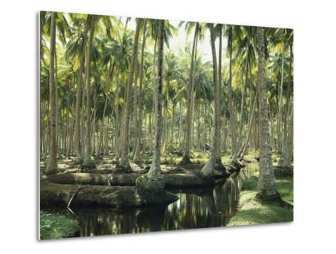 Sri Lanka, Coconut Palm Plantation-Thonig-Metal Print