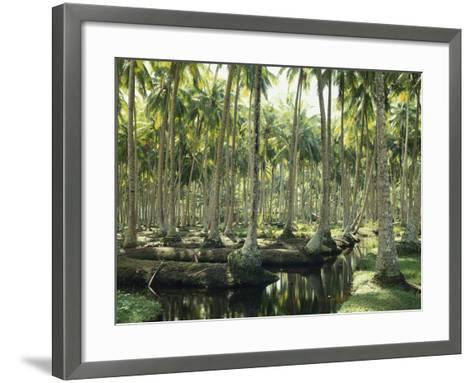 Sri Lanka, Coconut Palm Plantation-Thonig-Framed Art Print