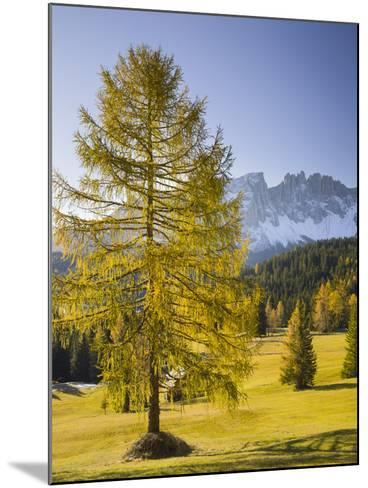 Autumnal Alp in Front of the Mountain Latemar, Kšlbleggiesen, Near Niger Pass, Larch, South Tyrol-Rainer Mirau-Mounted Photographic Print