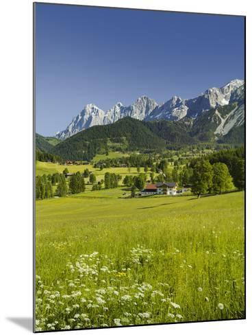 Ramsau, Dachstein, Summer Meadow, Styria, Austria-Rainer Mirau-Mounted Photographic Print