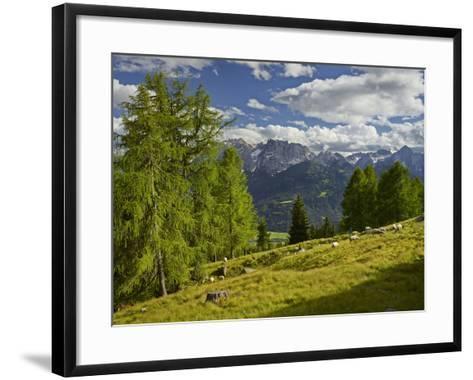 Sheep at the Iselsberg, Lienz Dolomites, East Tyrol, Tyrol, Austria-Rainer Mirau-Framed Art Print