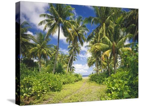 Maldives, Coconut Palms-Thonig-Stretched Canvas Print