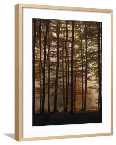 Spruce Forest, Way, Morning Fog-Thonig-Framed Art Print
