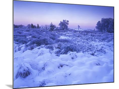 Belgium, High Fens, Hautes Fagnes, High Fens-Eifel Nature Park, Moor in Winter before Sunrise-Andreas Keil-Mounted Photographic Print