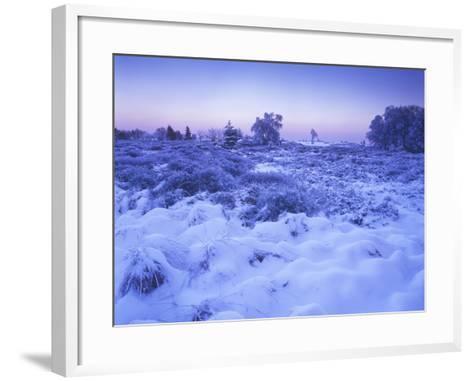 Belgium, High Fens, Hautes Fagnes, High Fens-Eifel Nature Park, Moor in Winter before Sunrise-Andreas Keil-Framed Art Print