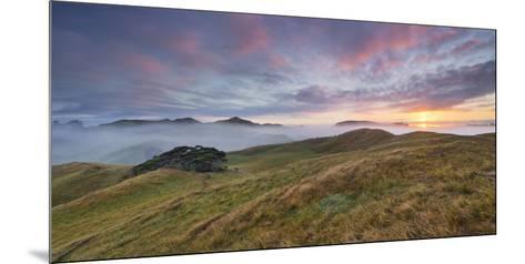 Morning Mood, Sheep Pasture, Wharariki, Tasman, South Island, New Zealand-Rainer Mirau-Mounted Photographic Print