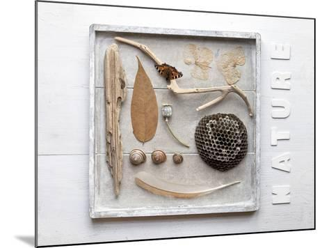 Still Life, Frames, Collection, Natural Materials-Andrea Haase-Mounted Photographic Print