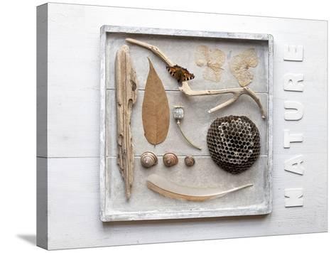 Still Life, Frames, Collection, Natural Materials-Andrea Haase-Stretched Canvas Print