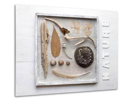 Still Life, Frames, Collection, Natural Materials-Andrea Haase-Metal Print
