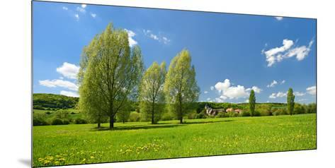 Spring in the Unstruttal, Poplars on Meadow with Dandelion, Near Freyburg-Andreas Vitting-Mounted Photographic Print