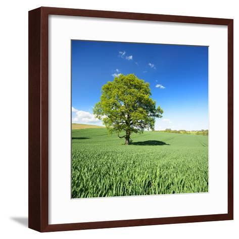 Single Oak in Grain Field in Spring, Back Light, Burgenlandkreis, Saxony-Anhalt, Germany-Andreas Vitting-Framed Art Print